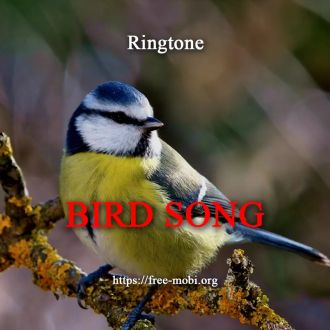 Ringtone: Birds song
