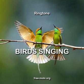 Ringtone: Birds singing outside