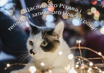 Новорічне побажання з котом