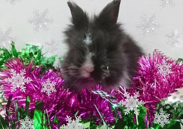 Кролик в сніжинках