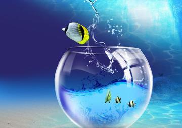 Fish out of aquarium