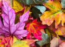 Wallpapers Landscape - Beautiful leaves in fall